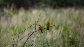 Makgoro Lodge Activities - Bird Watching