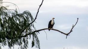 Makgoro Lodge Activities - Bird Watching