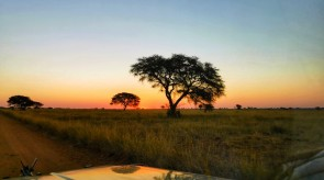 Makgoro Lodge Activities - Sunset Game Drive