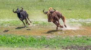 Makgoro Lodge - Game Walk