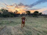 Sunset walk at Makgoro Lodge